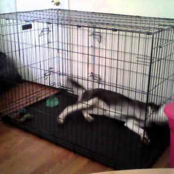 Husky Cage