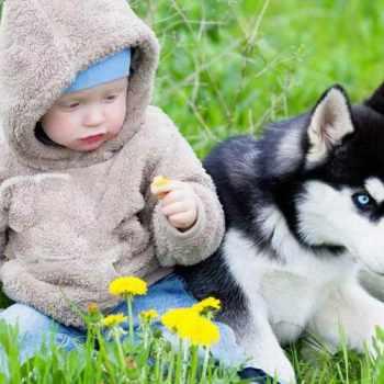 Husky Kids