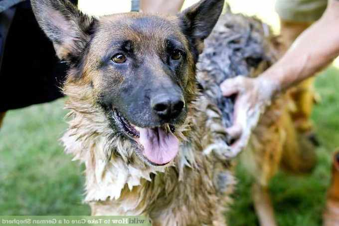 How To Care For A German Shepherd