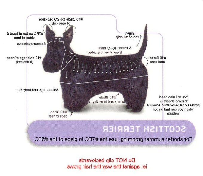 How To Groom A Scottish Terrier