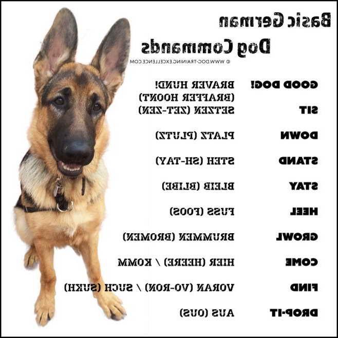 How To Train My German Shepherd Like A Police Dog