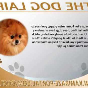 How To Care For A Pomeranian Puppy