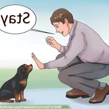 How To Train Your Rottweiler Puppy