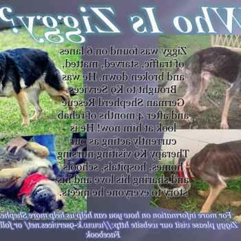 K9 German Shepherd Rescue