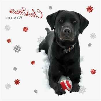 Labrador Christmas Cards