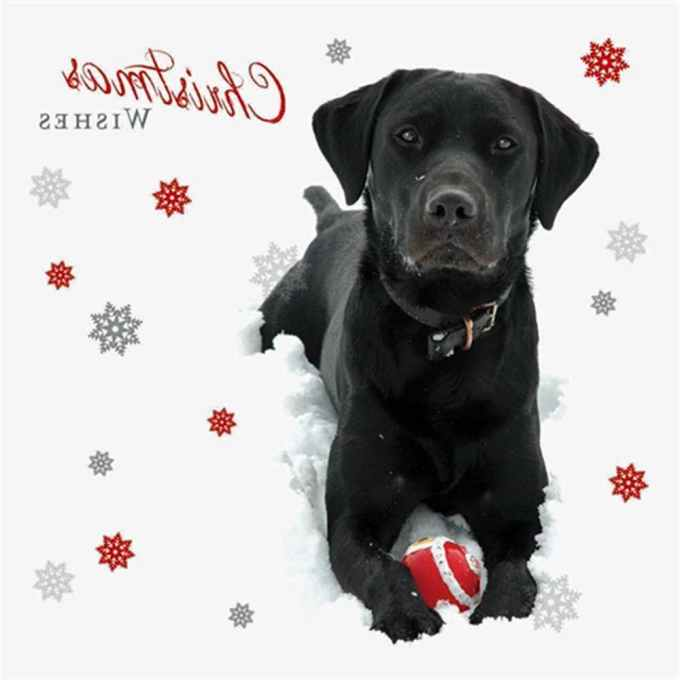 Labrador Christmas Cards