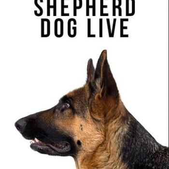 How Long Do German Shepherds Live 2