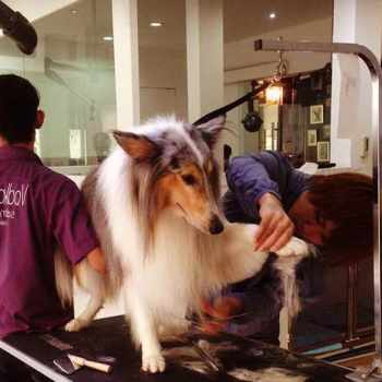 Dog Grooming in El Cajon