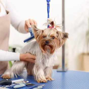 Dog Grooming Portland Oregon