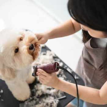 Fort Worth Mobile Dog Grooming