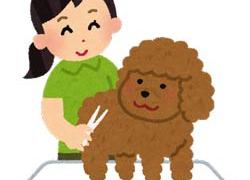 初心者がペット(愛犬)のために学ぶトリマー通信講座