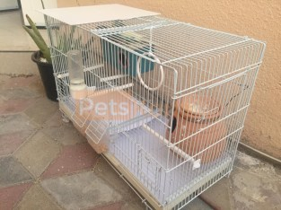 Birds cage & 2 budgies (pair) for sale