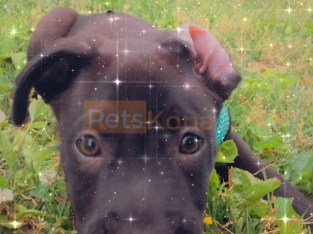 A loving playful pup needs new home