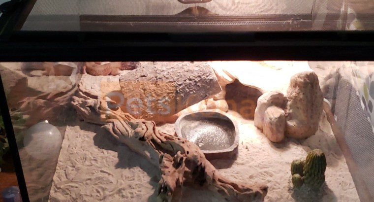Rehome 2 geckos