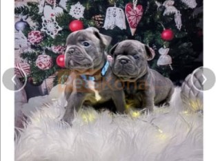 Beautiful Chunky Frenchies