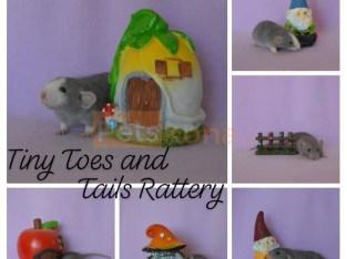 Rat Companions