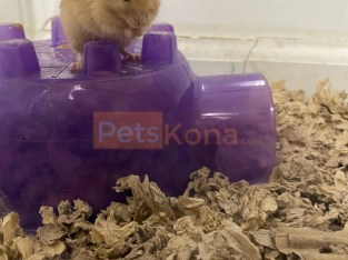 4 male mice for rehome