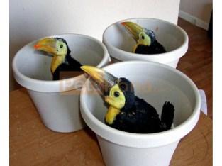Toucans toco parrots for sale Whats-app +237699461444