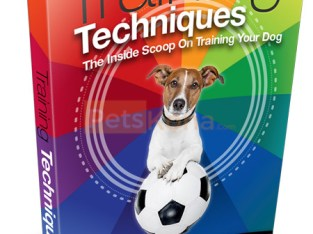Tips to Train your dog with this free ebook