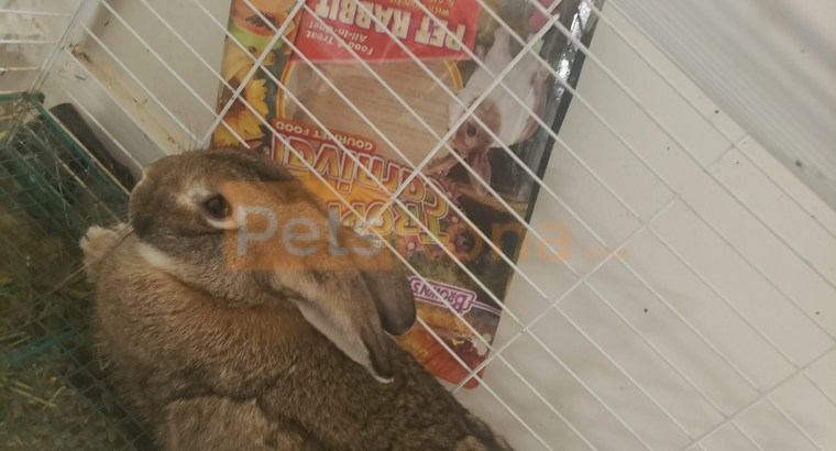 Rabbit needs a home FAST