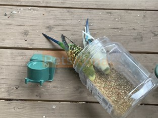 2 parakeets with cage and food