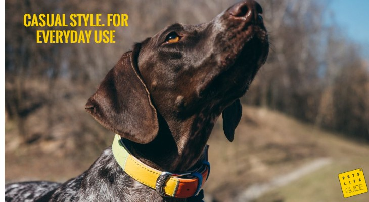 Leather Collar for German Shorthaired Pointer