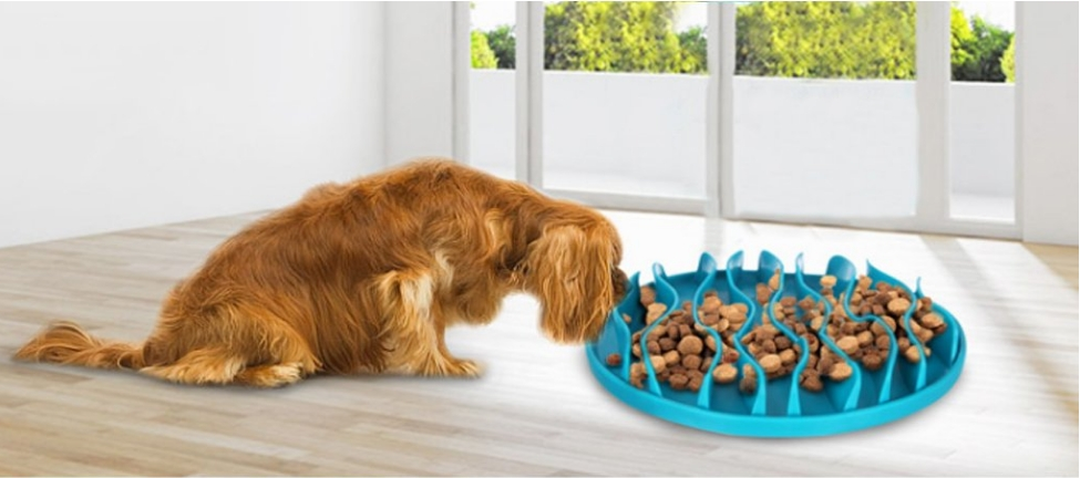 NNDA CO Pet Dog Interactive Slow Food Pet Bowl review