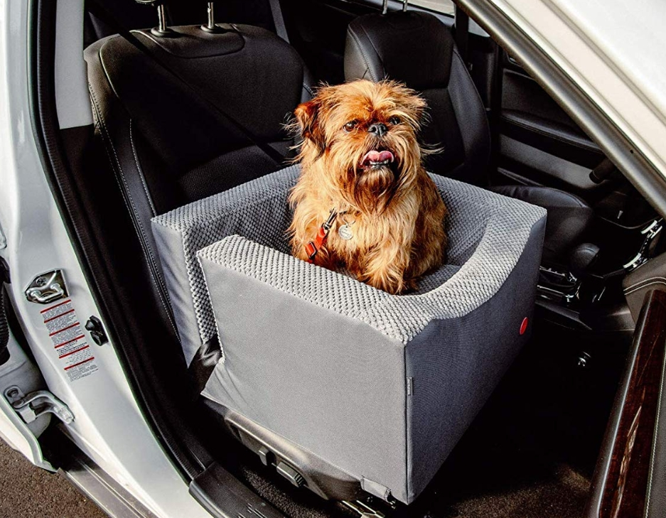 Harley and Cho Dog Booster Car Seat