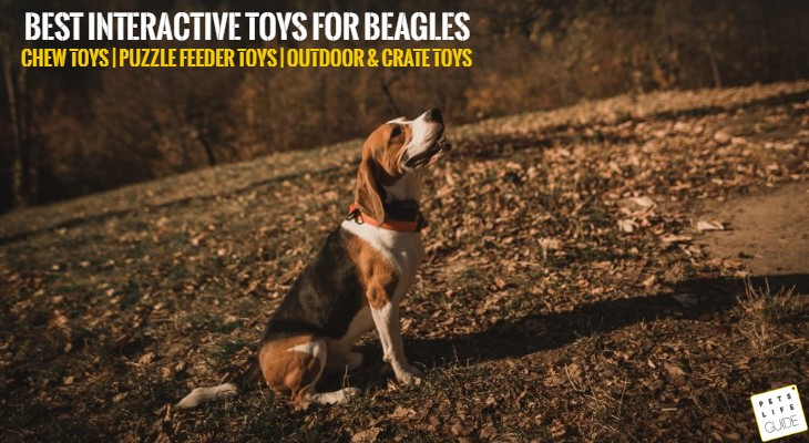 Toys for Beagles