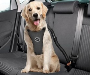 SlowTon Dog Car Harness review