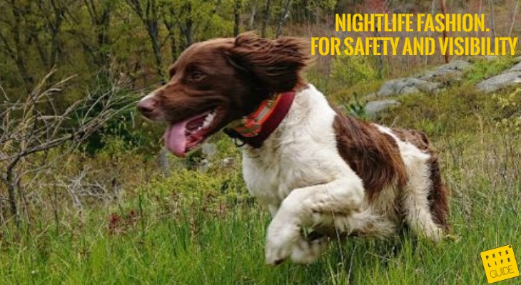 LED Collar for Spaniel
