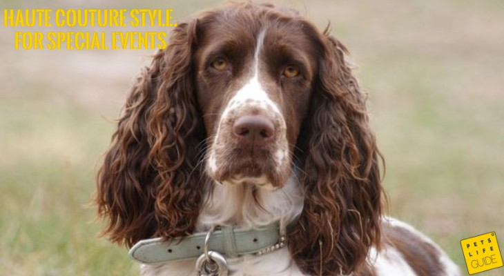 luxury collars for spaniels