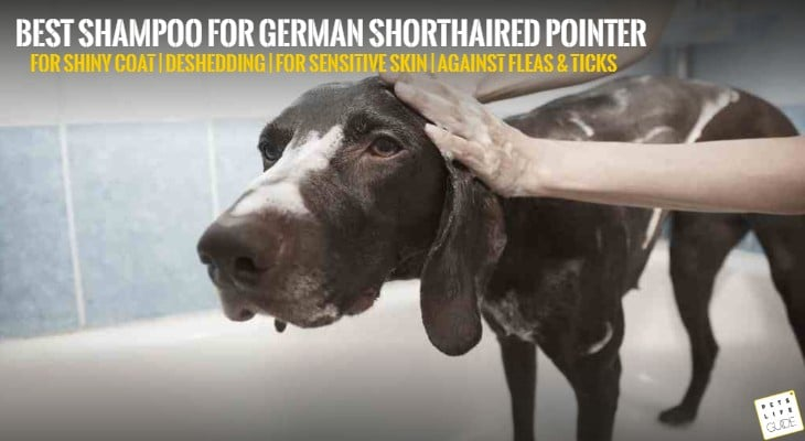Best Shampoo for German Shorthaired Pointer