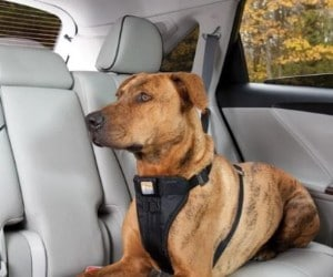 Kurgo Enhanced Strength Tru-Fit Dog Car Harness review