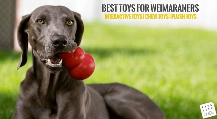 Best Toys for Weimaraners