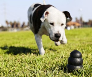 KONG Extreme Dog Toy - Toughest Natural Rubber, Black - Fun to Chew, Chase and Fetch review