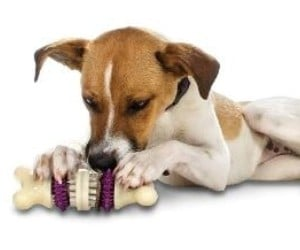 PetSafe Busy Buddy Bristle Bone Chew Toy for Dogs