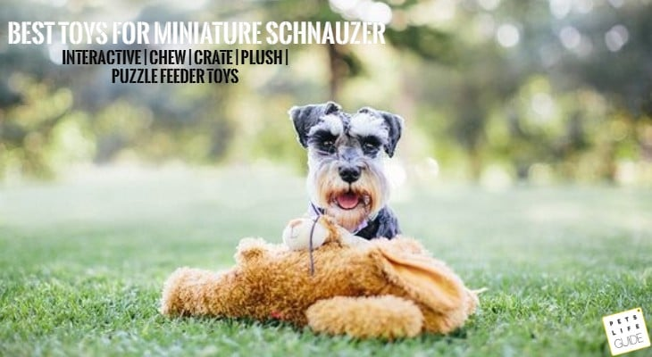 best dog toys for miniature schnauzer