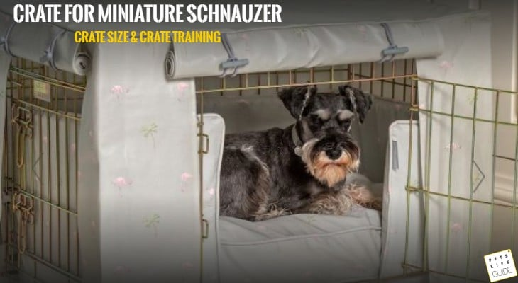 crate for miniature schnauzer