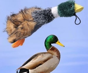 wangstar Pet Mallard Duck Dog Toy