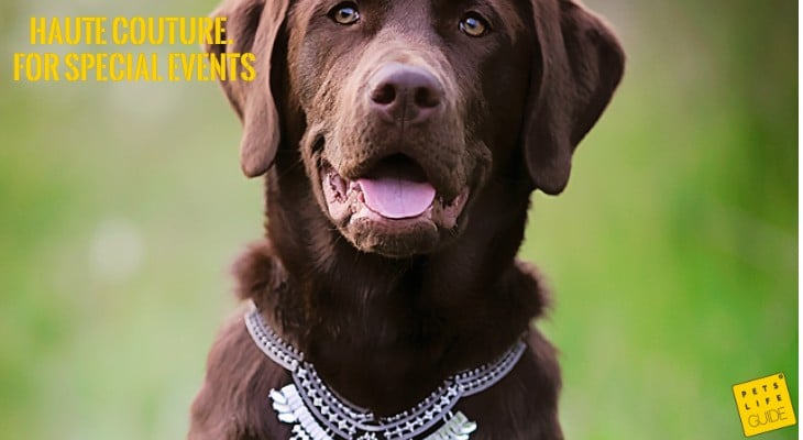 luxury collars for Labs
