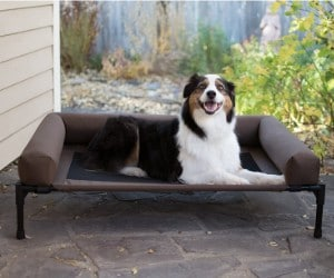 K&H PET PRODUCTS Original Bolster Elevated Pet Bed review
