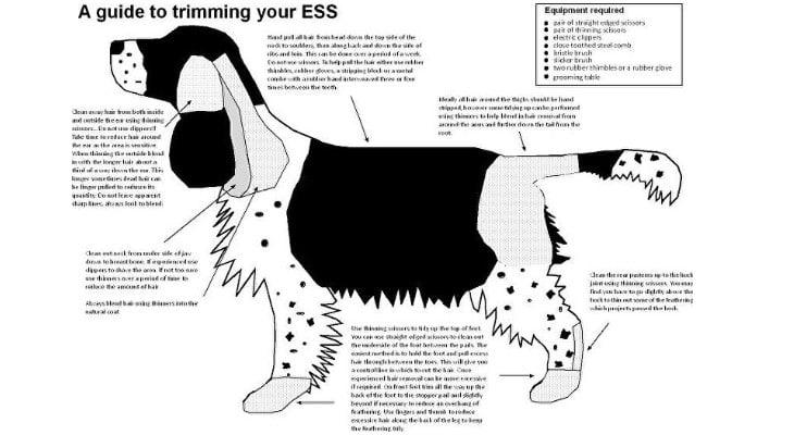 Springer Spaniel Grooming Chart