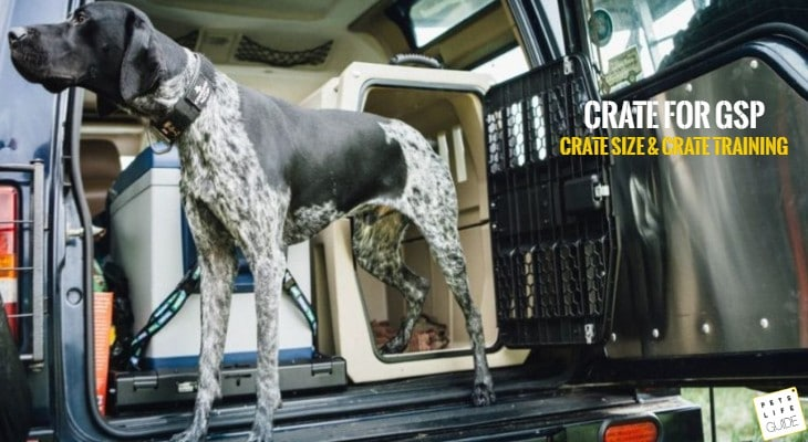 What Size Crate for German Shorthaired Pointer