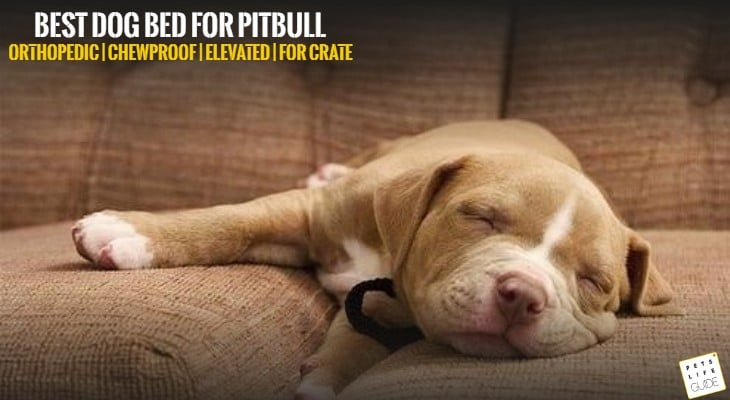 Best Dog Bed for Pitbull