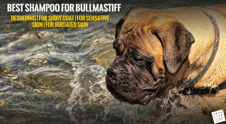 Best shampoo for Bullmastiff