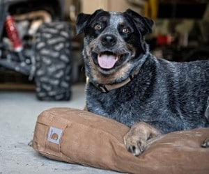Carhartt Dog Bed review