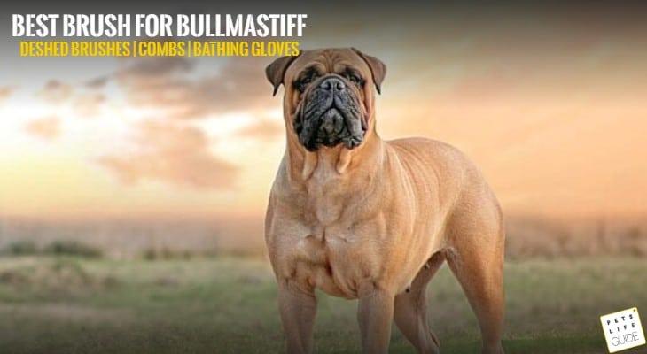 best brush for bullmastiff
