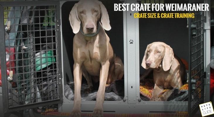 best crate for weimaraner