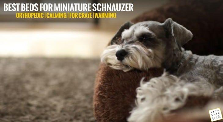 best dog bed for miniature schnauzer